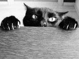мем Черный кот с острыми когтями