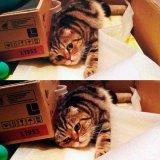 мем Да не бред какой-то - Кот лежит на животе