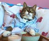 мем Доброе утро. Кот в постели с едой