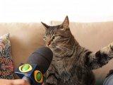 мем Допрашиваемый кот