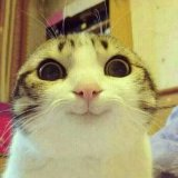 мем Довольный кот