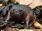 мем Дождевая лягушка