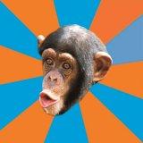мем Глупая обезьяна