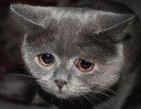 мем Грустная кошка