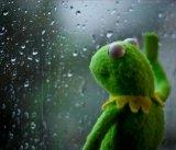 мем Грустная лягушка и дождь за окном