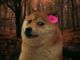 мем Грустная собака девочка