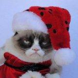 мем Грустный кот