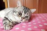 мем Грустный котик