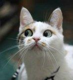 мем Кошка корчит морду