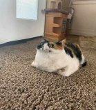 мем Кошка панорамное фото