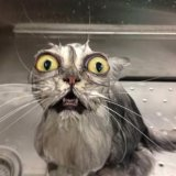 мем Кошка в ванной