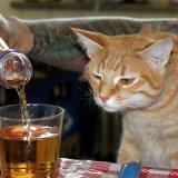 мем Кот алкоголик