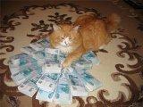 мем Кот и много денег