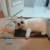 мем Кот и синяки под глазами