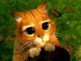 мем Кот из Шрека