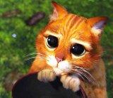 мем Кот из шрека с большими глазами