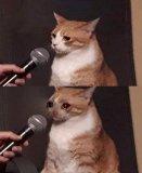 мем Кот микрофон и слезы