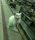 мем Кот на заводе