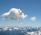 мем Кот облако