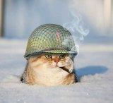 мем Кот про армию