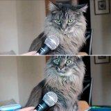 мем Кот с микрофоном