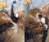 мем Кот с пистолетом во рту