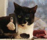 мем Кот с телефоном