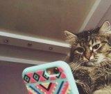 мем Кот смотрит в смартфон