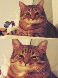 мем Кот - Ты справишься