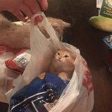 мем Кот в пакете