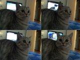 мем Кот в шоке