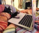 мем Кот за ноутбуком