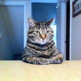 мем Кот за столом
