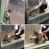 мем Кот застрял в витрине
