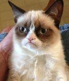 мем Котик с сердитой мордахой