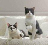 мем Коты показывают лайк