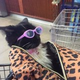 мем Крутой кот