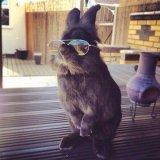 мем Крутой кролик