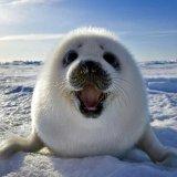 мем Легкая радость тюленя