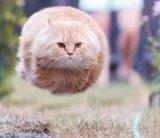 мем Летящий кот