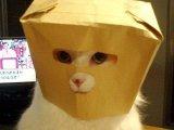 мем Маскировка кошки