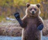 мем Медвед