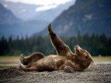 мем Медведь отдыхает