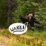 мем Медведь в кустах