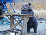 мем Медведь за столом