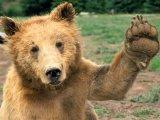 мем Мнение медведя