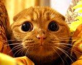 мем Мое лицо, когда (испуганный кот)