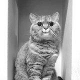 мем Мое лицо, когда (кот)