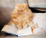 мем Мое лицо - кот Гарфи