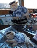 мем Морской котик